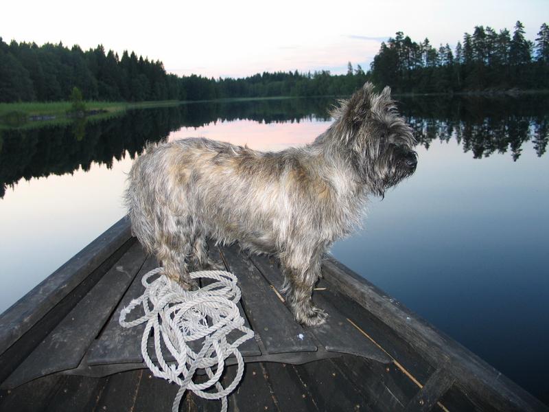 Cairn terrier in a rowingboat
