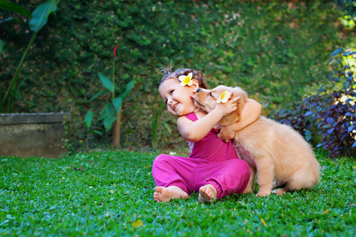Funny photo of happy baby hugging beautiful golden labrador retriever puppy. Girl play with dog. Family lifestyle, positive emotions of children fun games with home pet on summer vacation.